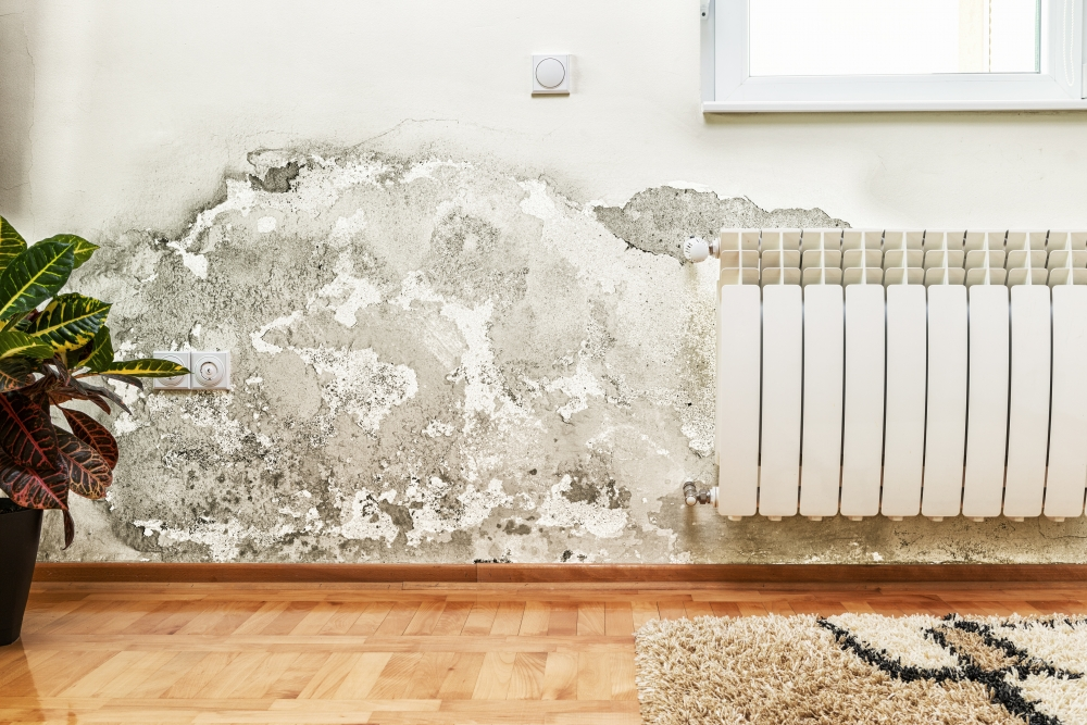 If There's a Musty Smell, Call the Damp Specialist |